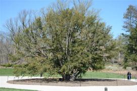 Longwood Gardens Apr 15 2016 (129)