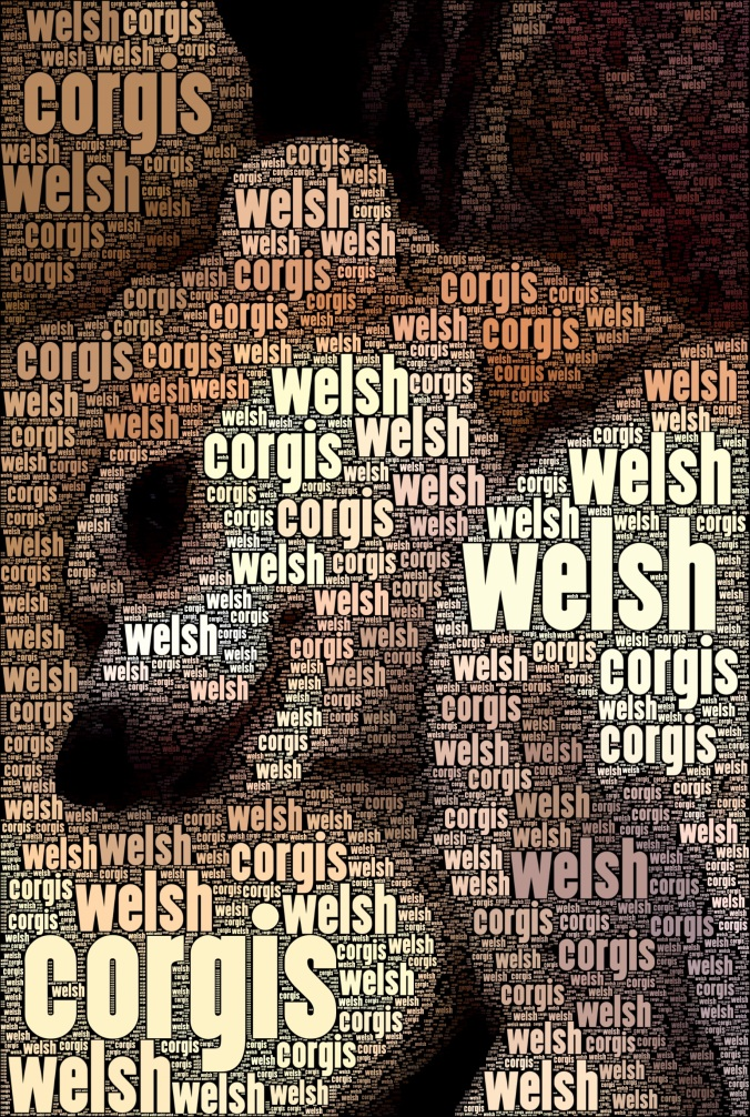 Merri Welsh Corgis