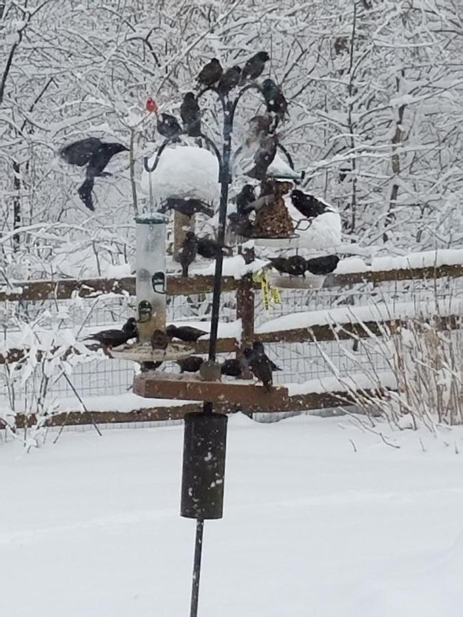 Bird feeder March snow storm