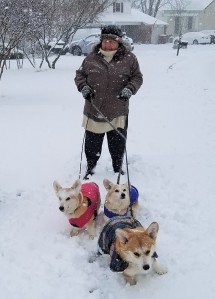 Corgis and me in snow